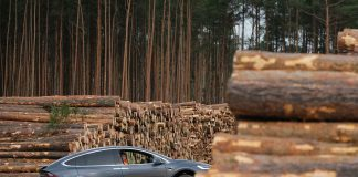 German court allows Tesla to clear forest for its Gigafactory