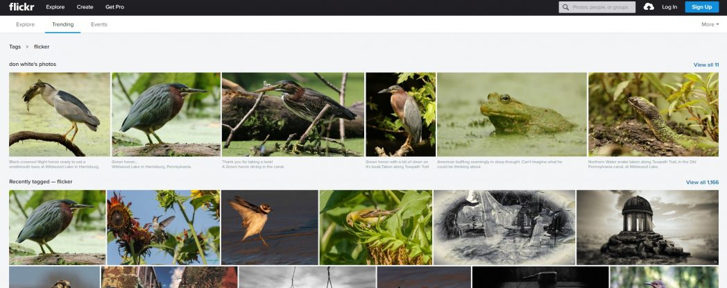 20 Amazing Picasa Alternatives That are Worth Trying